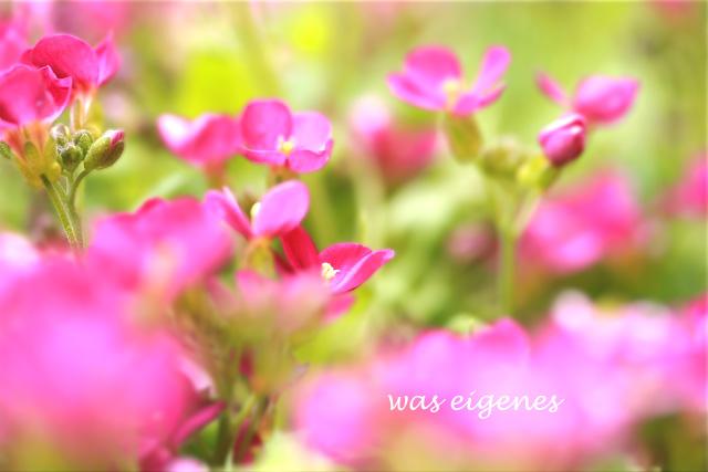 Ostern 2010 | Blumen | waseigenes.com