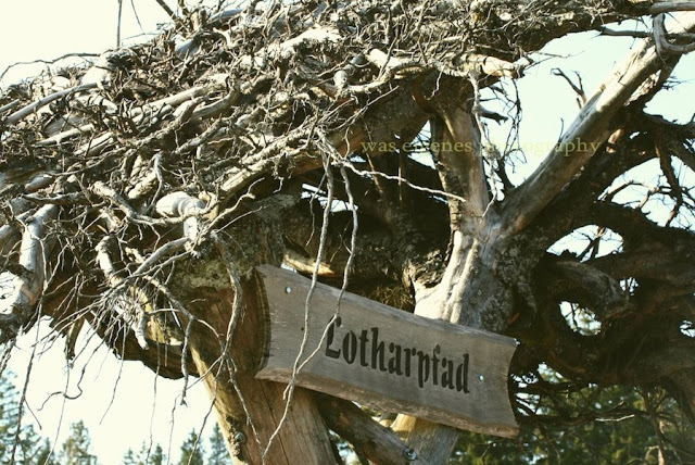 Lotharpfad | Schwarzwald | waseigenes.com