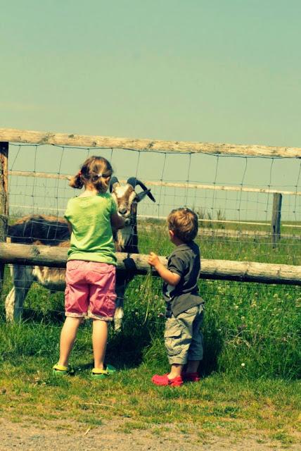 Nordsee Greetsiel | Urlaub mit dem Radl | Fahrradurlaub | waseigenes.com