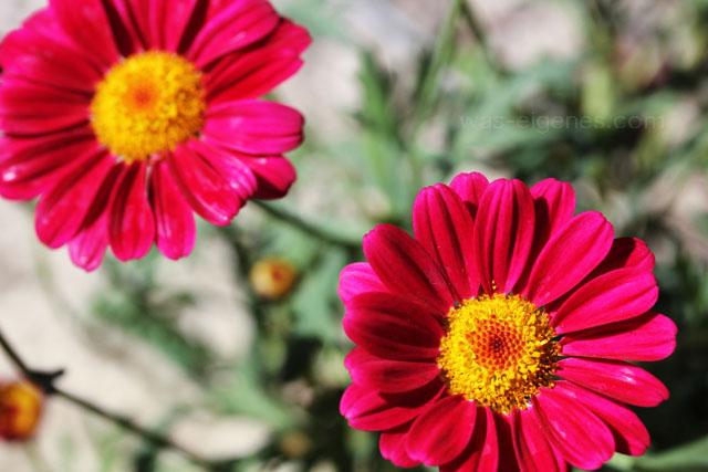 Makro Fotografie | Blumen | Marienkäfer | waseigenes.com
