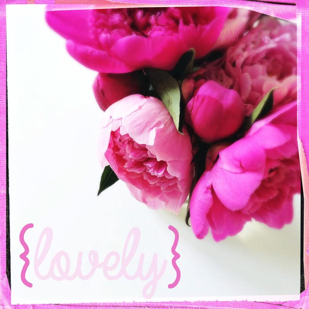 lovely rose waseigenes color me happy
