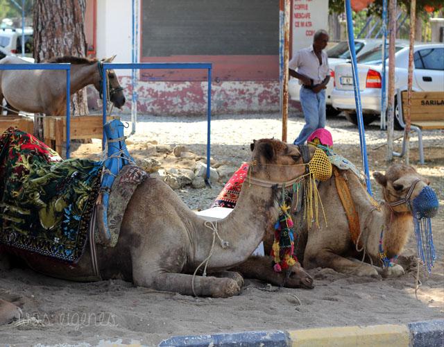 12v12 was eigenes manavgat kamele