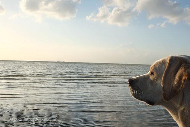 makkum beach resort niederlande was eigenes blog 1