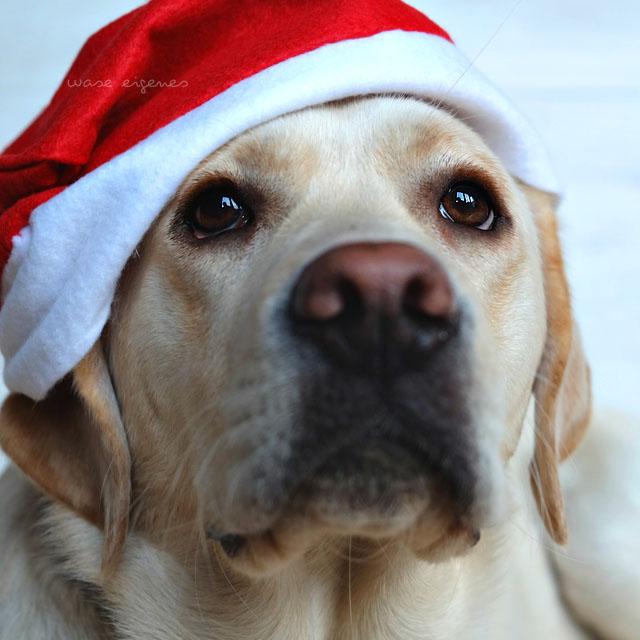 mollie geburtstag weihnachten was eigenes blog