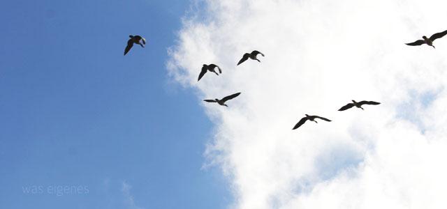Raus aus den Federn, raus aus der geliebten Komfortzone! Ein Experiment. | Der frühe Vogel fängt den Wurm | Morgens um 5 Uhr aufstehen | waseigenescom DIY Blog