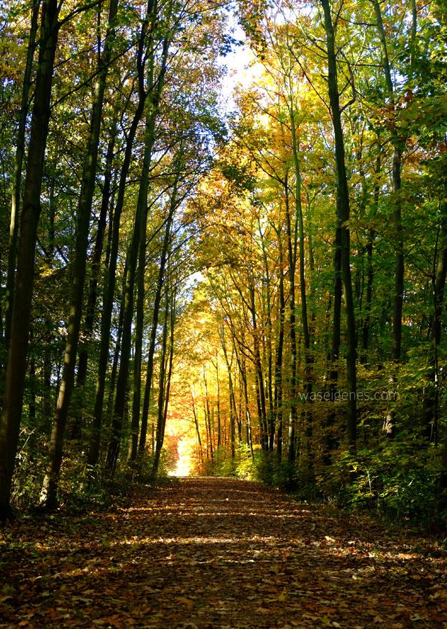 Goldener Herbst 2016 | waseigenes.com