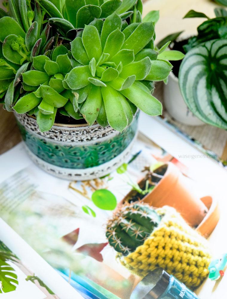 urban jungle | Grünpflanzen & Pflanzendeko | Sukkulenten | vintage Blumentopf öppning | Wohnen in Grün | waseigenes.com