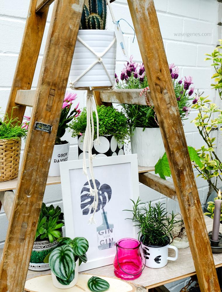urban jungle | Grünpflanzen & Pflanzendeko | urban jungle Leiter | waseigenes.com
