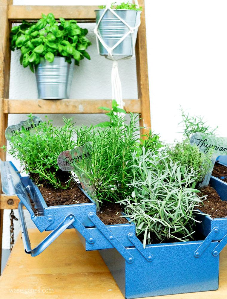 Kräutergarten im Werkzeugkasten | DIY Kräutergarten | urban gardening | Basilikum | waseigenes.com