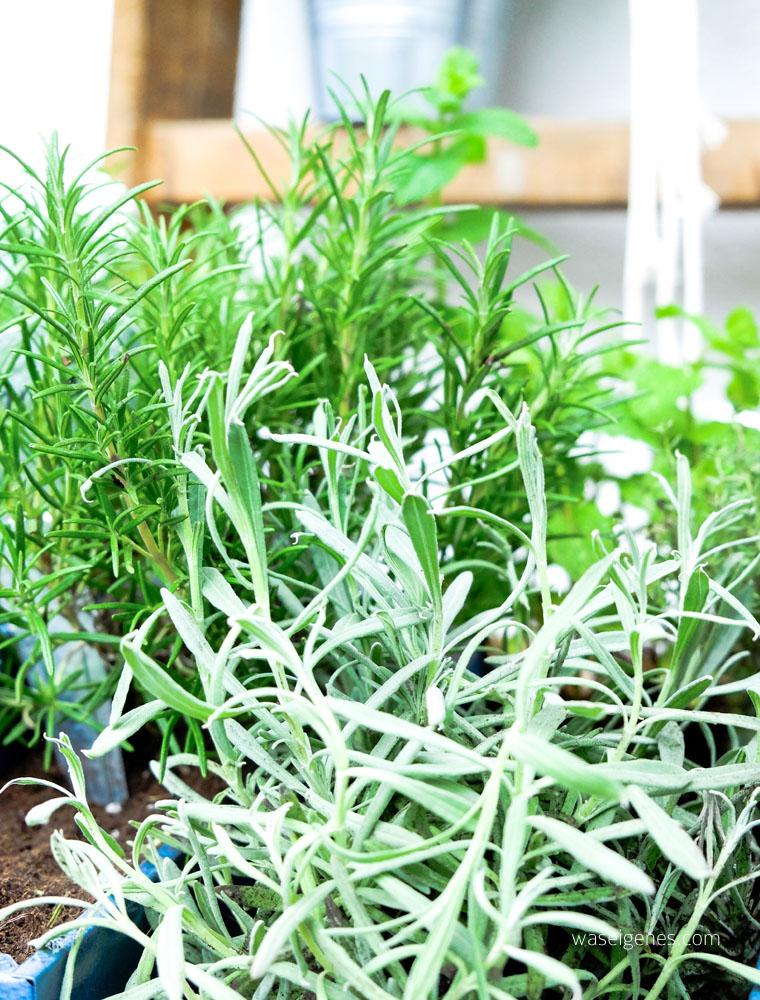 Kräutergarten im Werkzeugkasten | DIY Kräutergarten | urban gardening | waseigenes.com