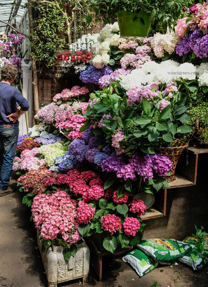 Paris: Marché aux Fleurs | Blumenmarkt | Place Louis Lépine, Paris |waseigenes.com