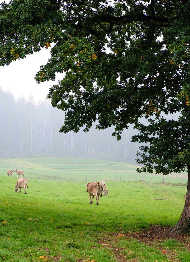 Bio Bauernhof Jackelhof Bayern | Naturland, Andechser Molkerei, REWE Bio | weil Bio nicht gleich Bio ist | waseigenes.com
