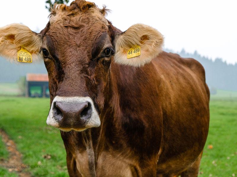 Weidekuh, Bio-Bauernhof Jackelhof Bayern | REWE Bio | weil Bio nicht gleich Bio ist | waseigenes.com