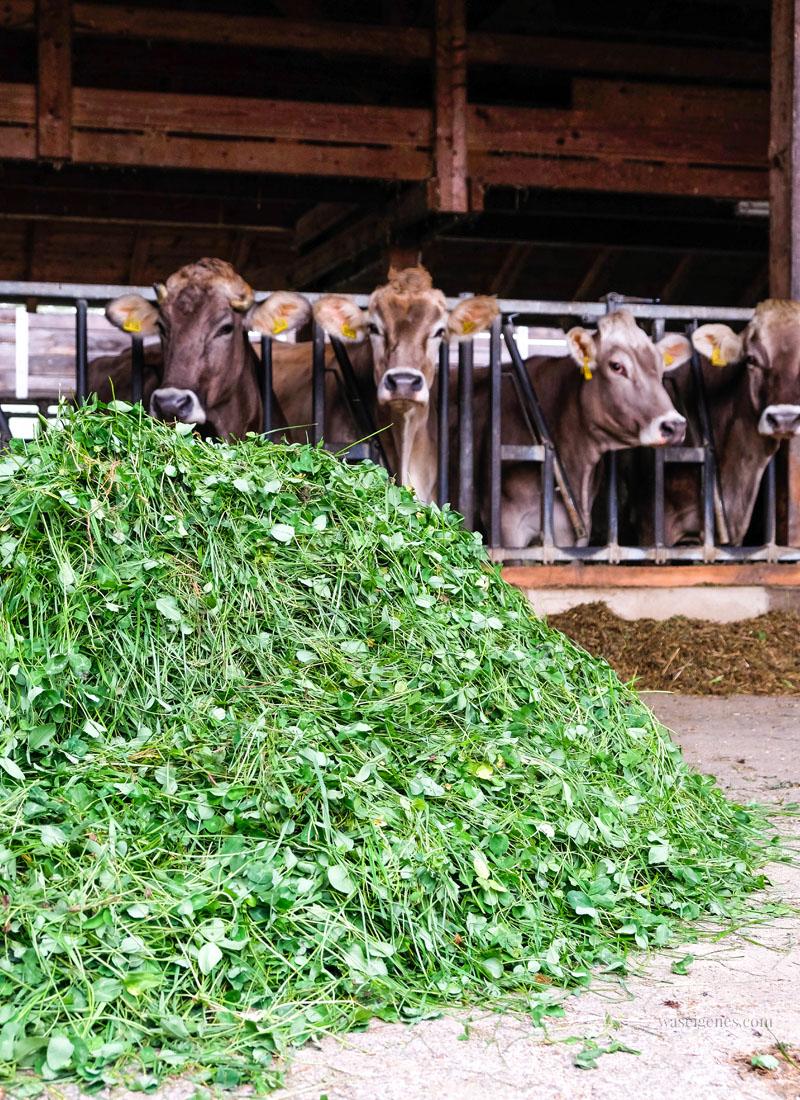 Was frisst eine Kuh am Tag? Bio Bauernhof Jackelhof | Auf den Spuren der REWE Bio Milch | waseigenes.com