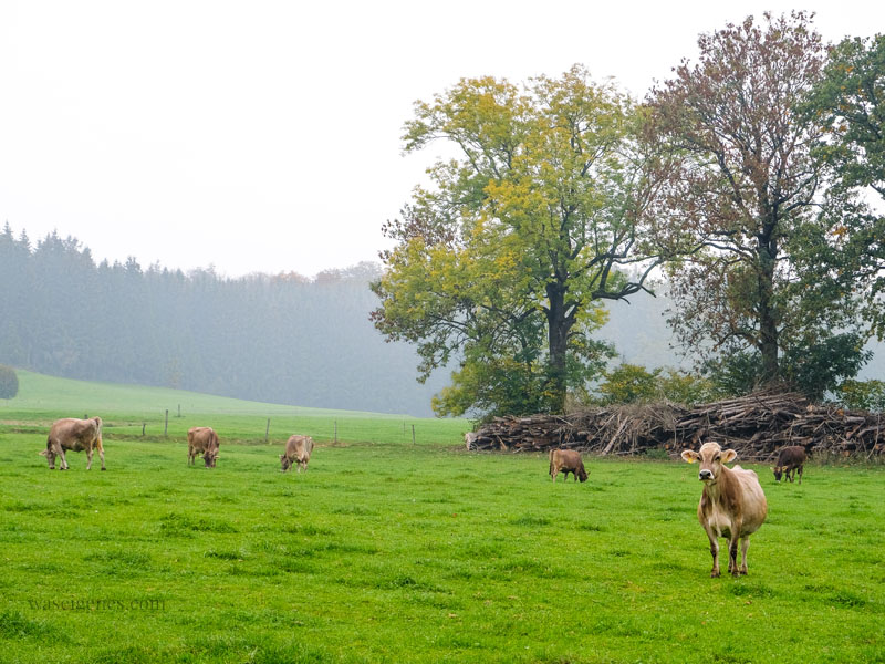 Weidekühe auf dem Bio-Bauernhof Jackelhof in Bayern | Naturland, Andechser Molkerei, REWE Bio | weil Bio nicht gleich Bio ist | waseigenes.com