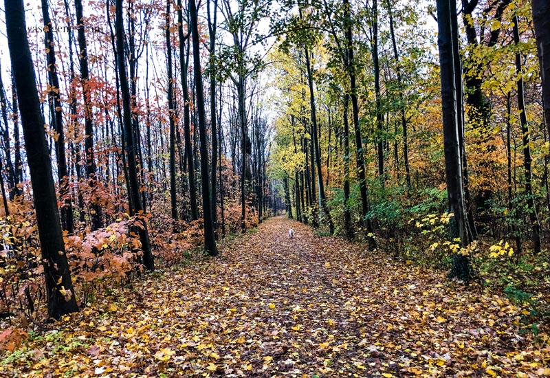12 von 12 im November 2018 Mein Tag in Bildern, waseigenes.com Wald