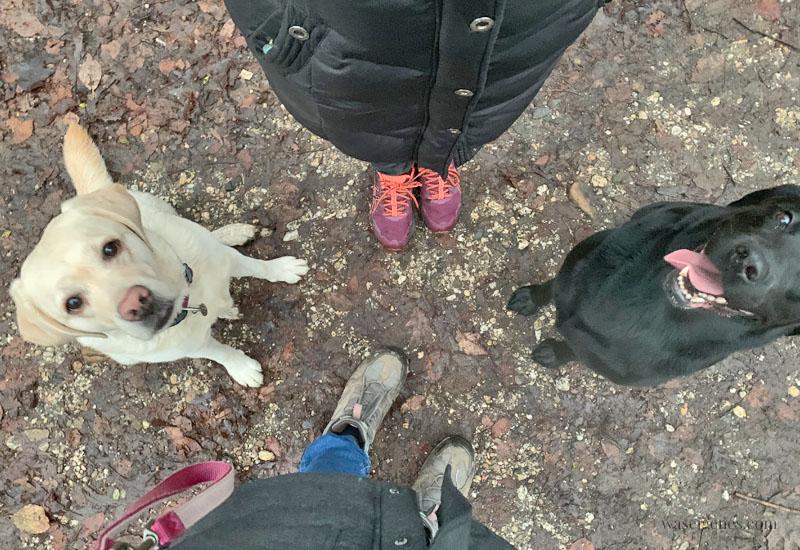 12 von 12 im Dezember 2018 | Mein Tag in Bildern | waseigenes.com #12von12 #meinTaginBildern #waseigenes Hunderunde