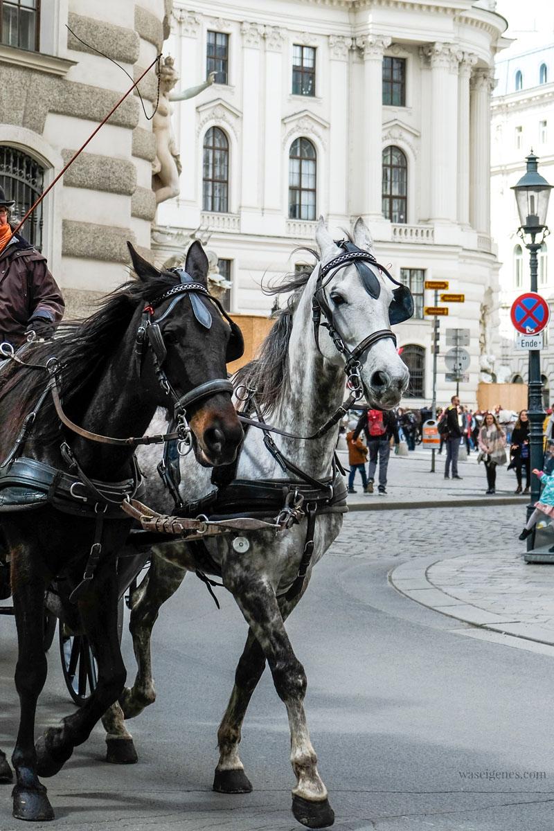 Sightseeing Wochenende: Wien | waseigenes.com | Fiaker