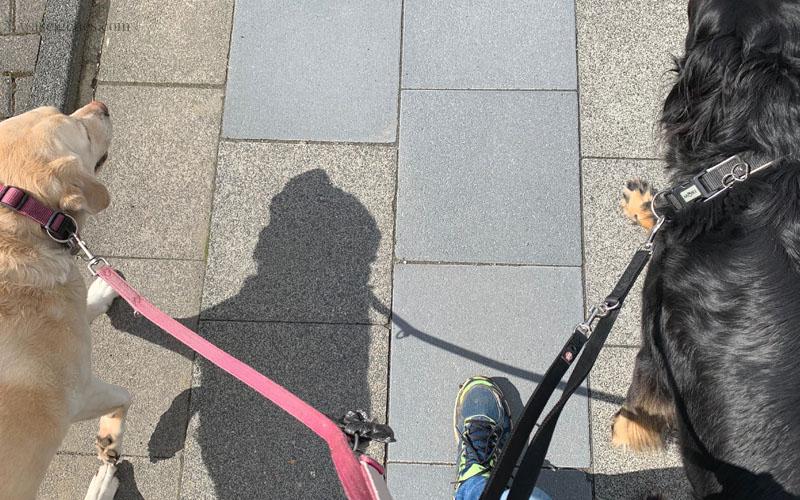 12 von 12 im Mai 2019, Mein Tag in Bildern | waseigenes.com Hunde