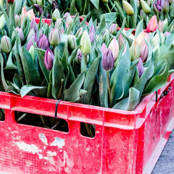 Tulpen - Gedanken zu Vatertag und Muttertag, waseigenes.com