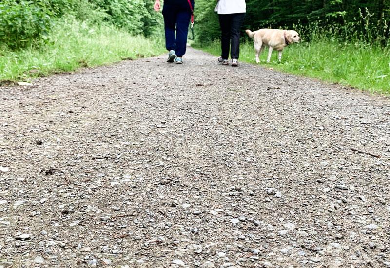 12 von 12 im Juni 2019 | Mein Tag in Bildern | waseigenes.com, Spaziergang