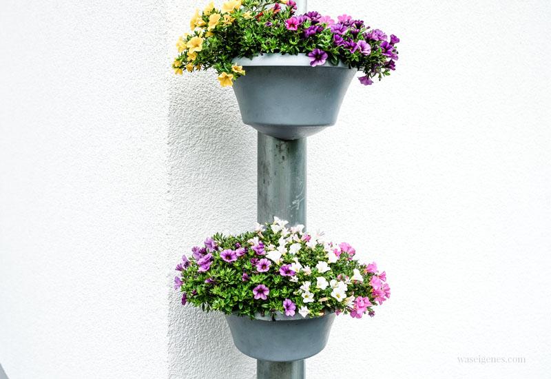 12 von 12 im Juni 2019 | Mein Tag in Bildern | waseigenes.com, Blumen