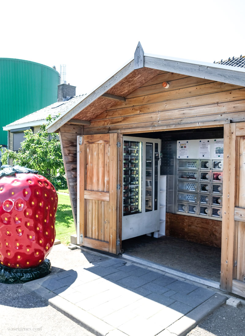 Westland, Holland. Erdbeeren und Paprika Verkaufsstand, waseigenes.com