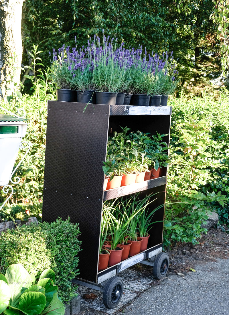 Westland, Holland. Lavendel und Kräuter Verkaufsstand, waseigenes.com