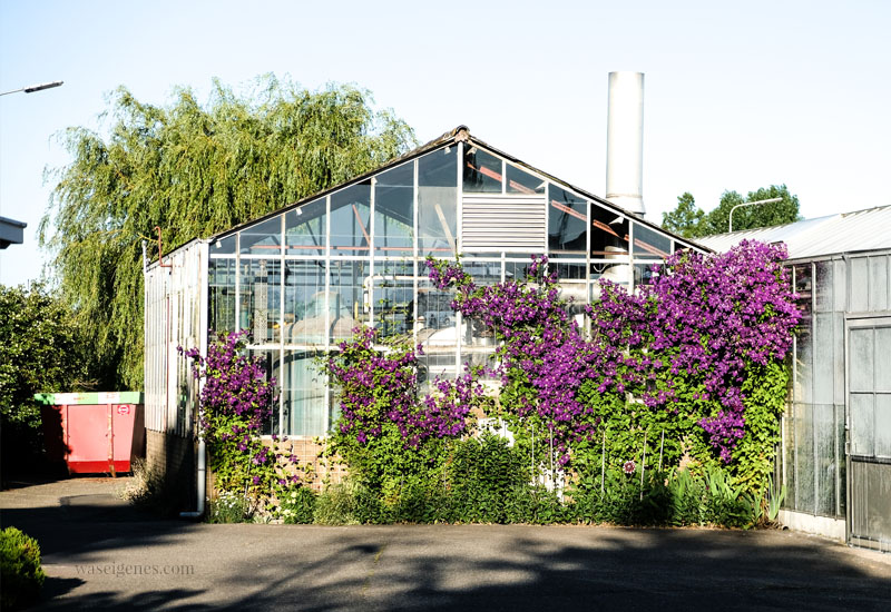 Gewächshaus in Westland, Holland, waseigenes.com