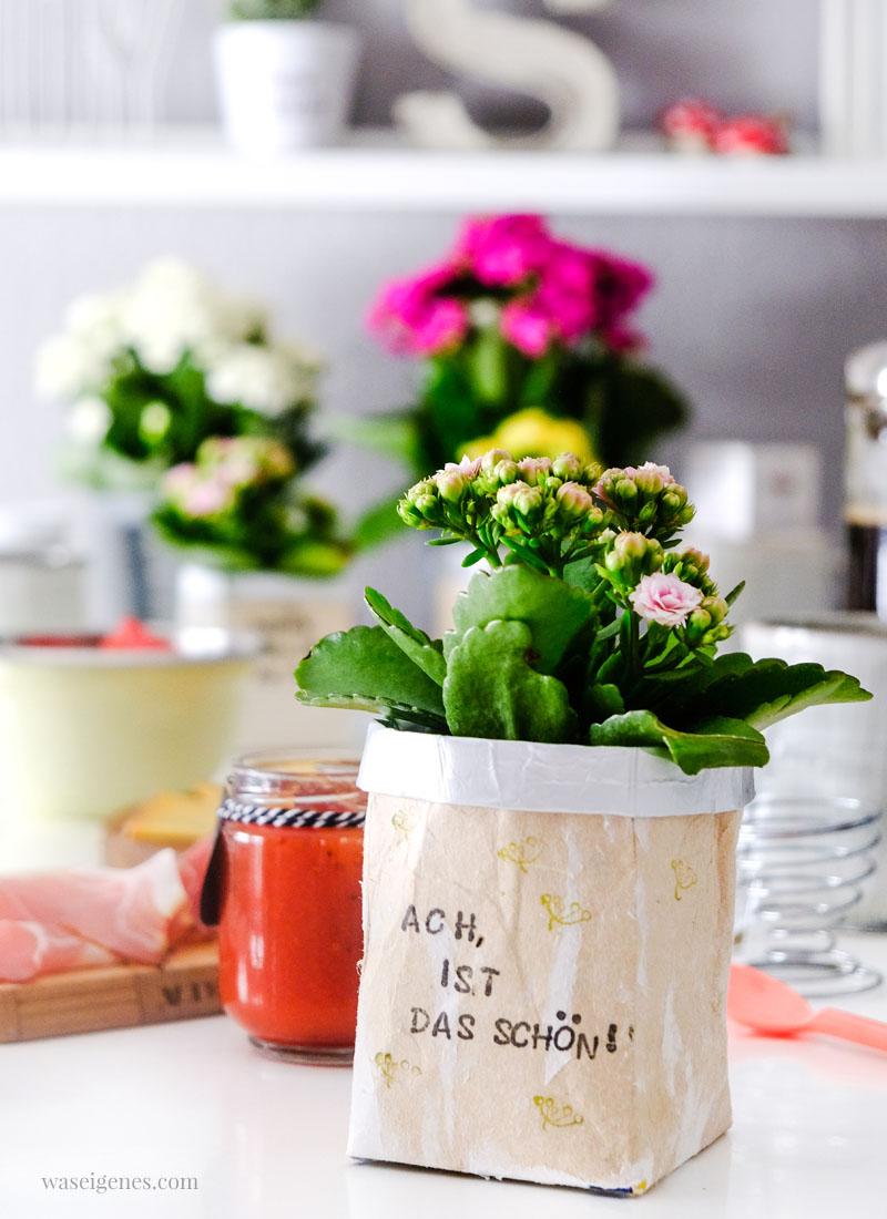 Kalanchoe (Flammendes Käthchen) im DIY Milchtüten Blumentopf | Bastelidee, Material & Anleitung | waseigenes.com