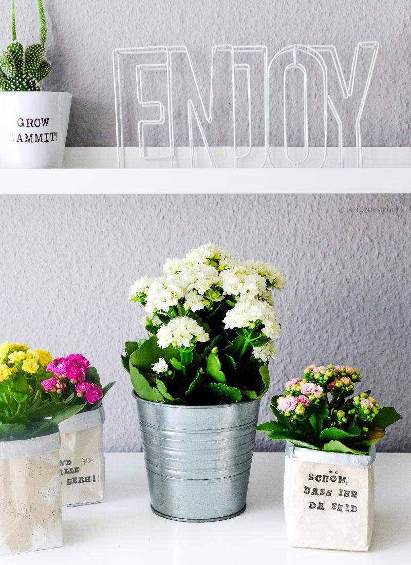 Kalanchoe | Flammendes Käthchen | DIY Milchtüten Blumentopf | Upcycling | waseigenes.com