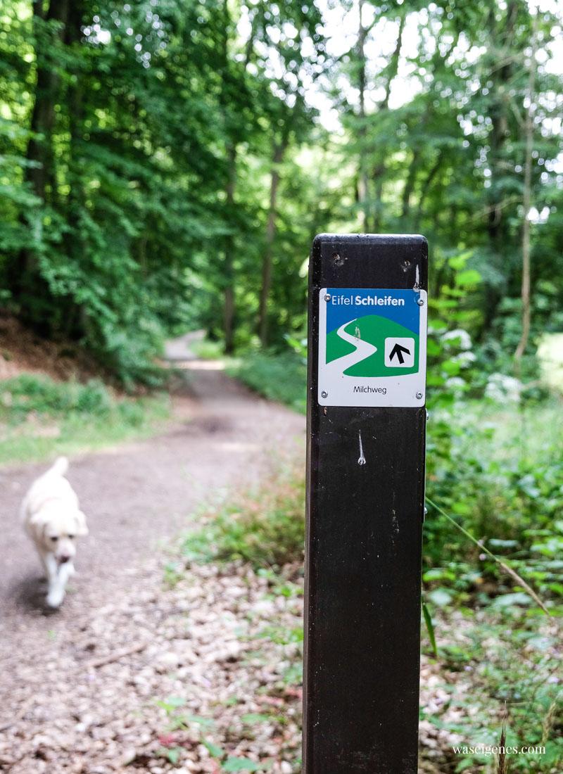 Eifel Schleifen: Der Milchwanderweg in der Eifel (Start in Steinfeld), waseigenes.com