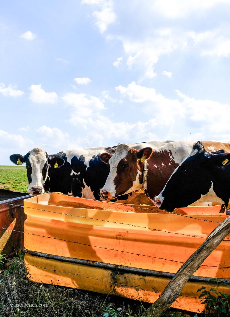 Sonntagsausflug: Der Milchwanderweg in der Eifel, waseigenes.com