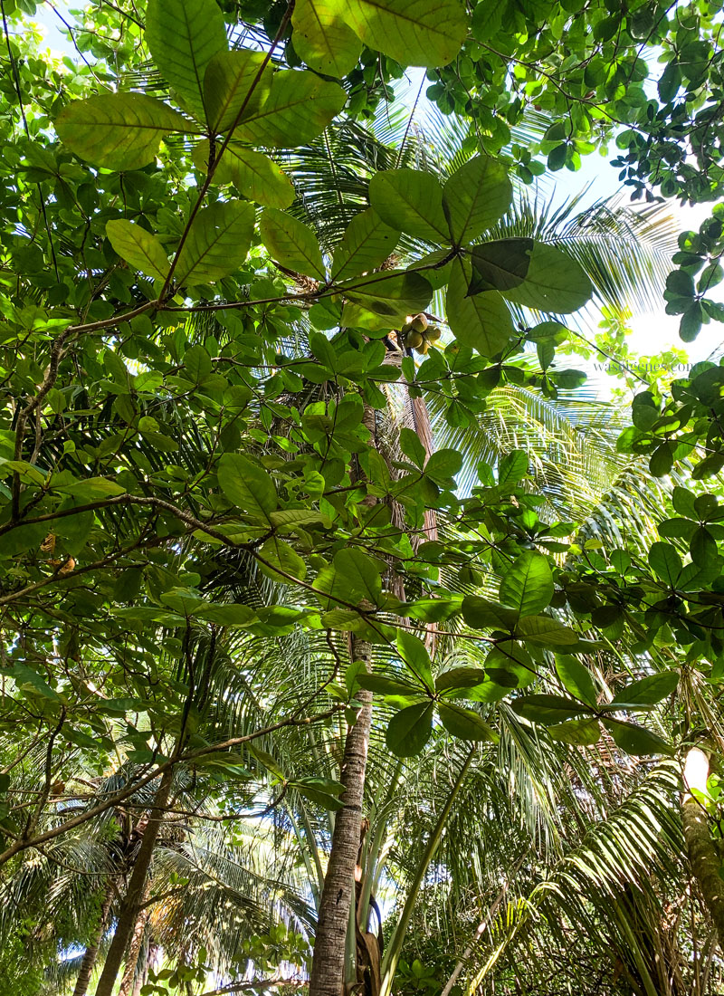 Travel: Dominikanische Republik| Ausflug zur Insel Catalina | waseigenes.com