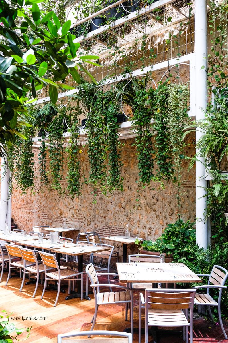 Restaurant  Buche de Perico (Calle El Conde Nr. 53) - Santo Domingo, Dominikanische Republik, Innenhof, Pflanzen, urban jungle, waseigenes.com