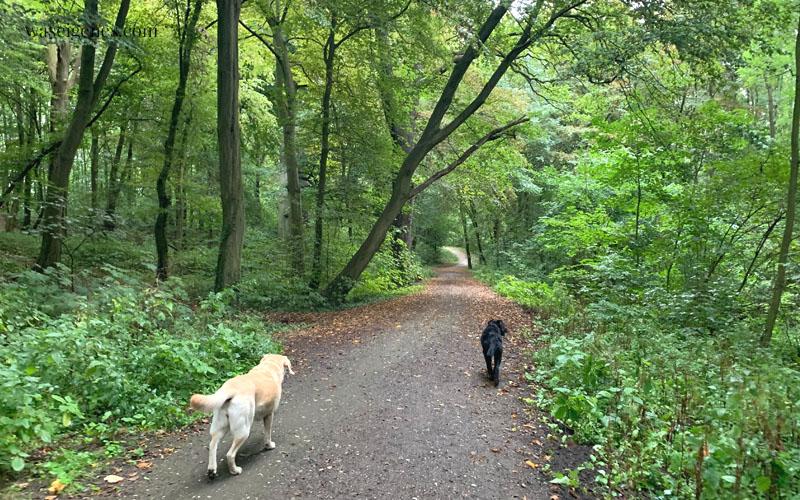 12 von 12 im September 2019 | Mein Tag in Bildern | waseigenes.com | Wald & Hunde
