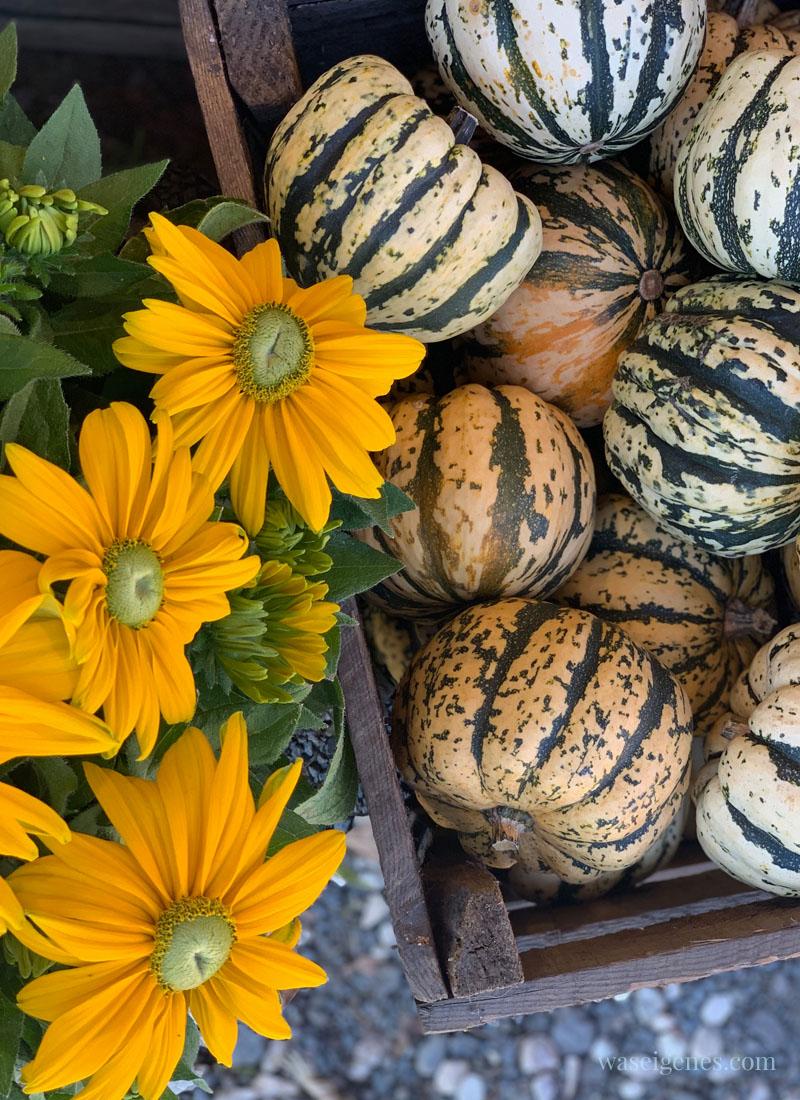 Hallo Herbst 2019 - Kürbisse & Sonnenblumen | waseigenes.com