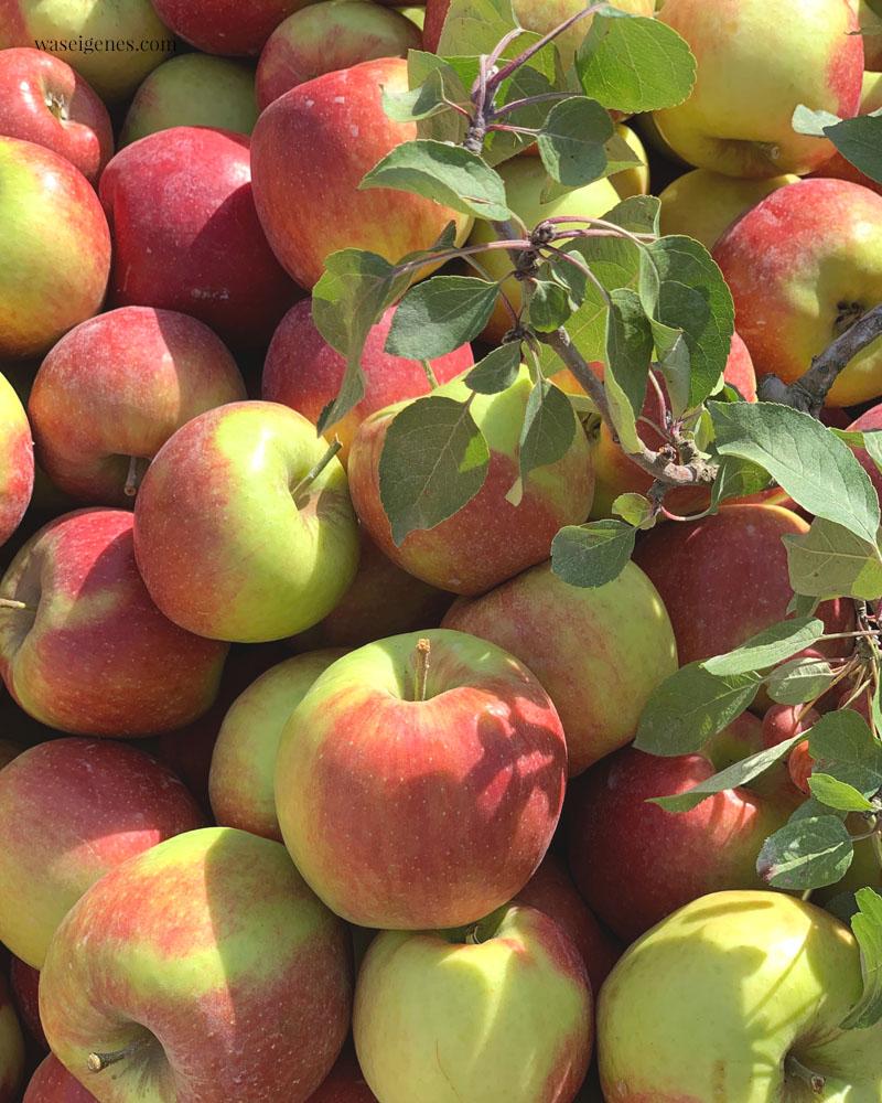 Hallo Herbst 2019 - herbstverrückt: Äpfel | waseigenes.com