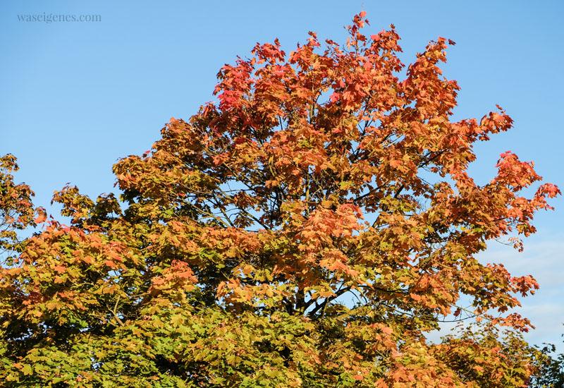12 von 12 im Oktober 2019 - Mein Tag in Bildern | waseigenes.com  Herbst