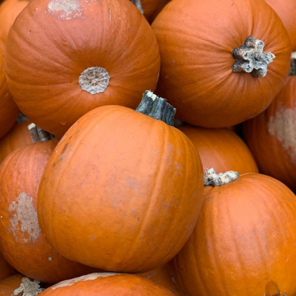 Herbstideen in Hülle und Fülle | Kürbisse | waseigenes.com