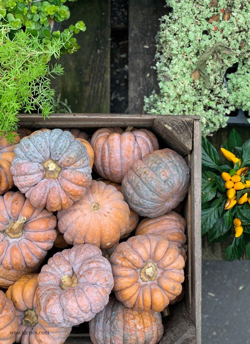 Kürbisse | Herbstideen in Hülle und Fülle: basteln, dekorieren, kochen & backen | waseigenes.com