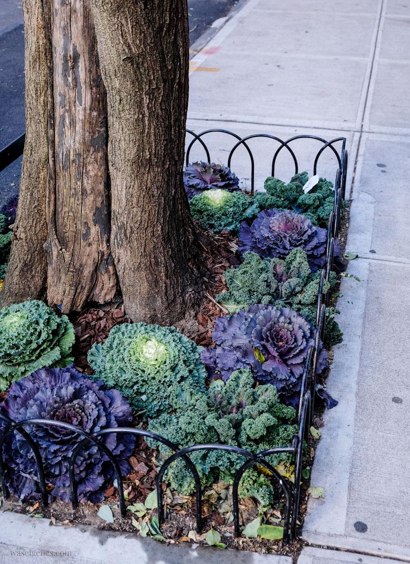 New York: Kohl statt Blumenbeet | waseigenes.com