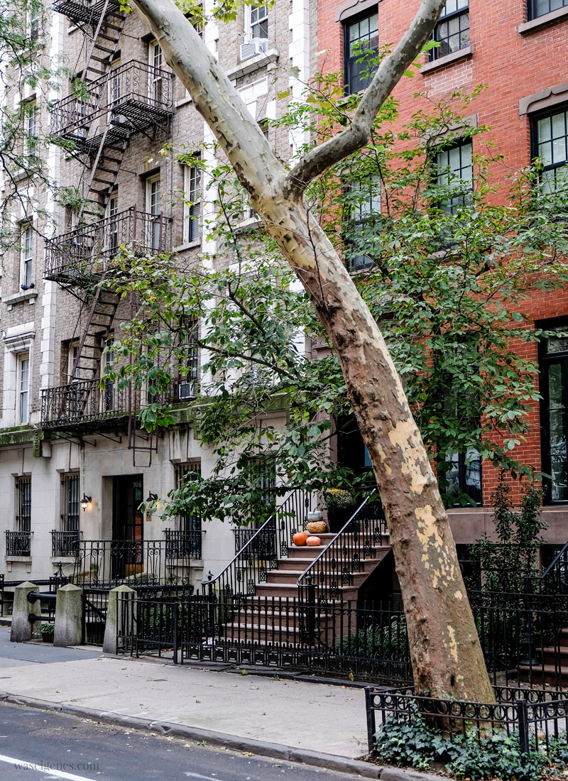 New York: Neighborhood - Kürbisse auf dem Treppenaufgang | waseigenes.com