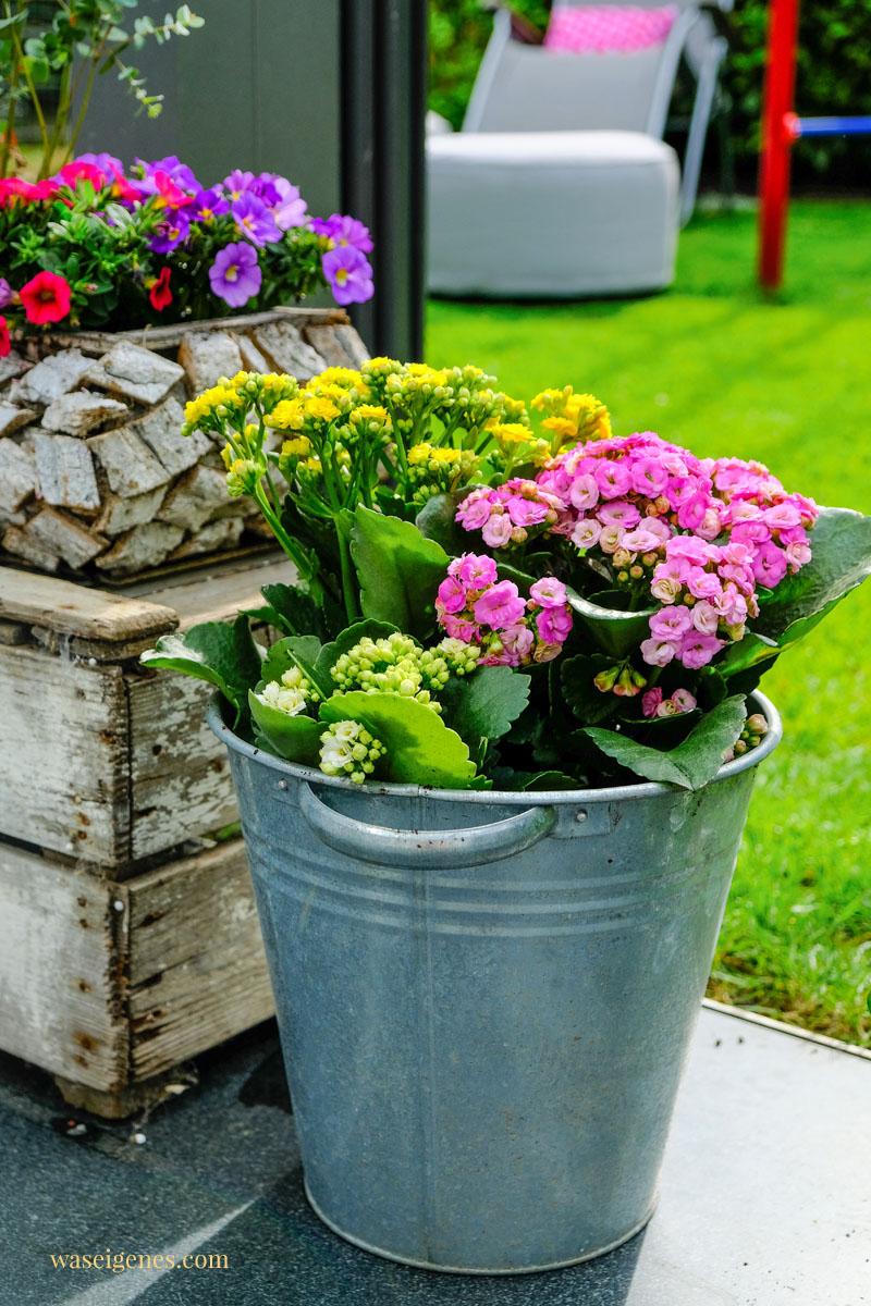 Unser Garten - Kalanchoe und andere Blumen, eine Wimpelkette, ein neues Kissen und Blumen am Regenrohr, waseigenes.com #waseigenes