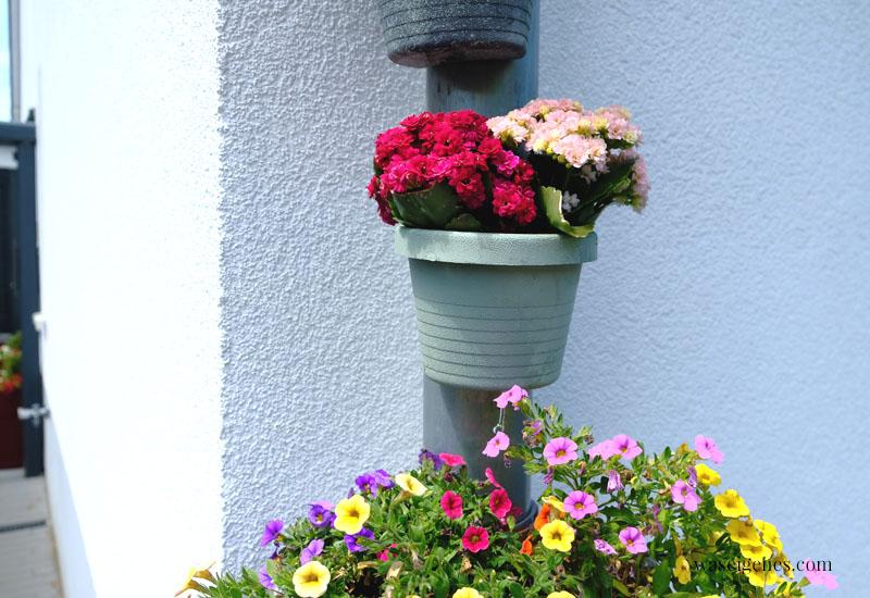 12 von 12 im Juni 2020 | Mein Tag in Bildern - waseigenes.com - Blumen am Regenrohr