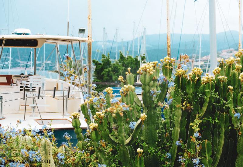Kreta: Kakteen am Hafen von Agios Nikolaos   waseigenes.com