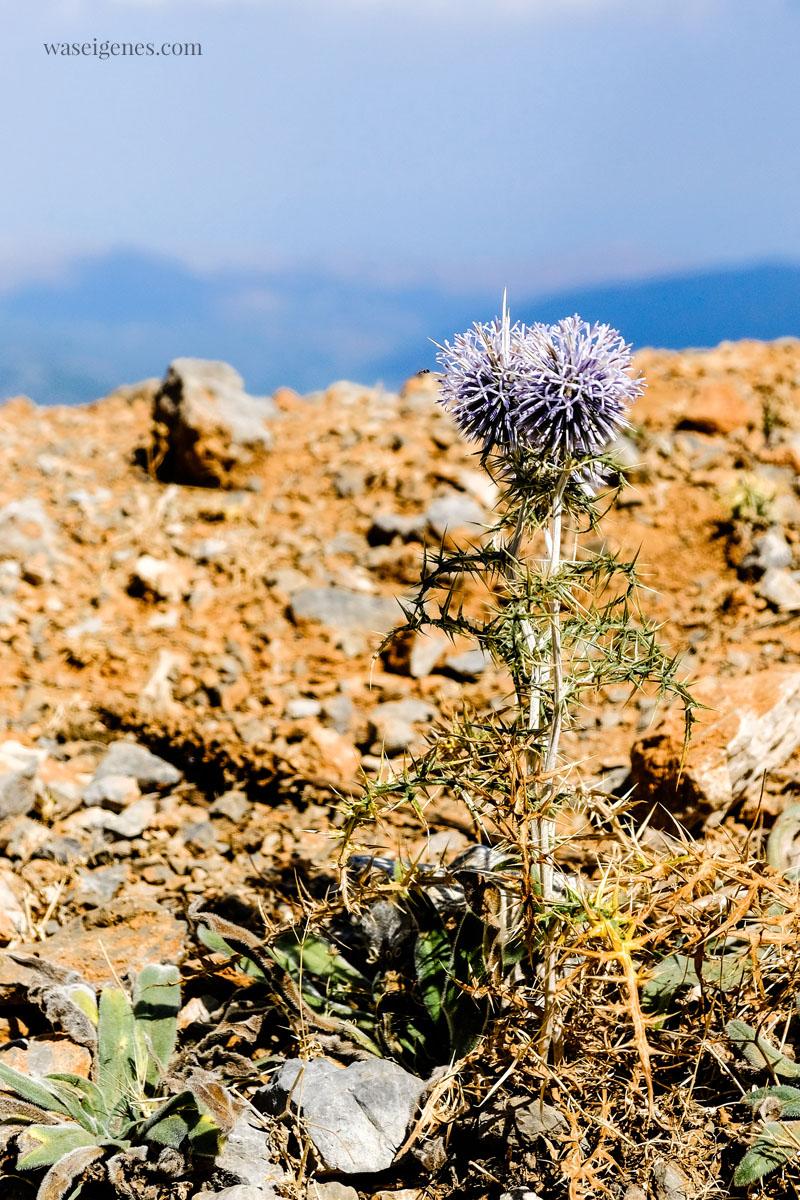 Diestel | Kreta | Crete | Griechenland | waseigenes.com