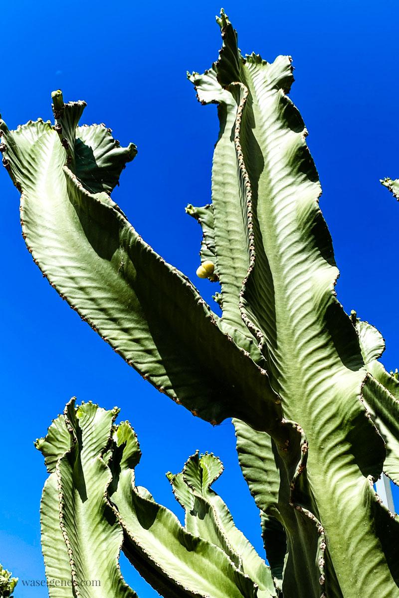 Kaktus | Kreta | Crete | Griechenland | waseigenes.com