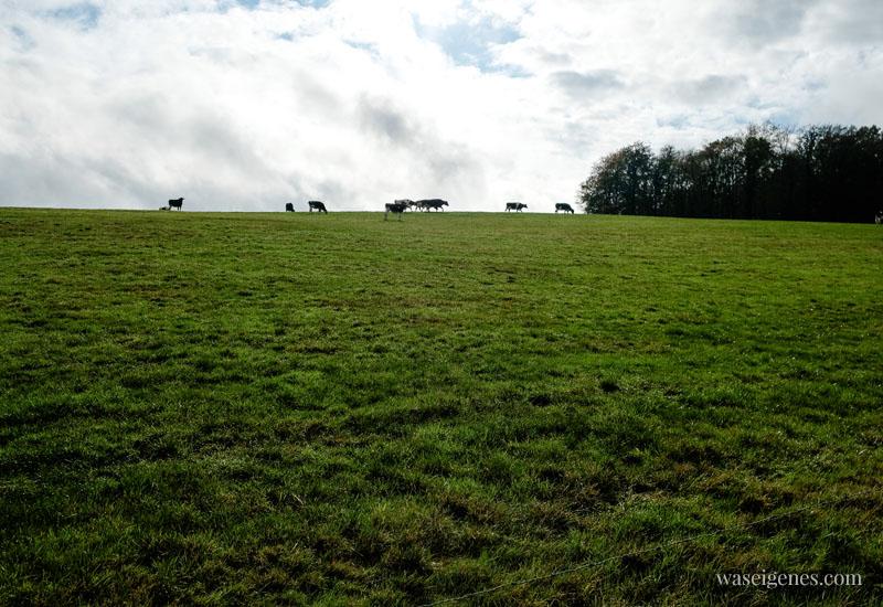 Milchweg im Bergischen Land - Startpunkt ist in Wipperfürth - ein ca. 4,2 km langer Wanderweg. Acht Tafeln weisen den Weg und erklären das von Milchkühen und Landwirtschaft geprägte Land | waseigenes.com