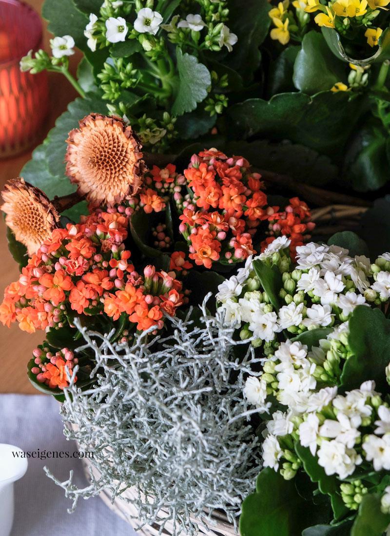 Herbstlich dekorierter Pflanzring mit Kalanchoes, Stacheldraht und Rosmarin | waseigenes.com